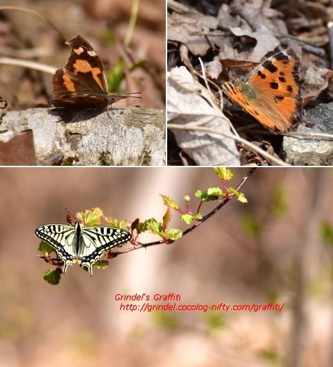 Haru190407butterflies