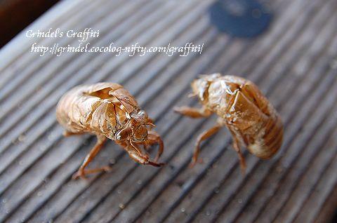 Insectkumanukegara