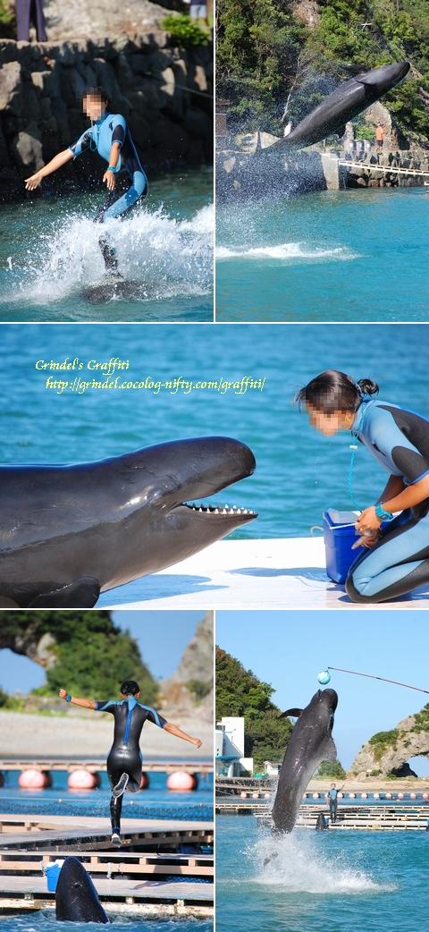 Whaleshow120803