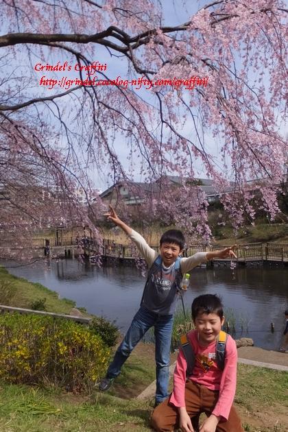 Shunharu140329sakura1