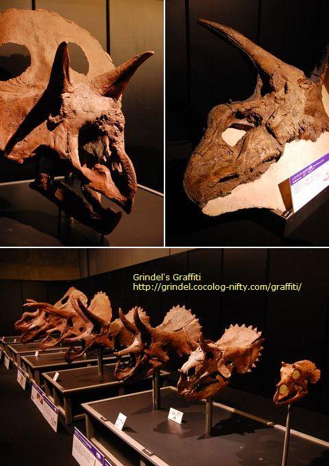 Triceratopsset