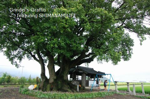 Shunharu140816oogusu5