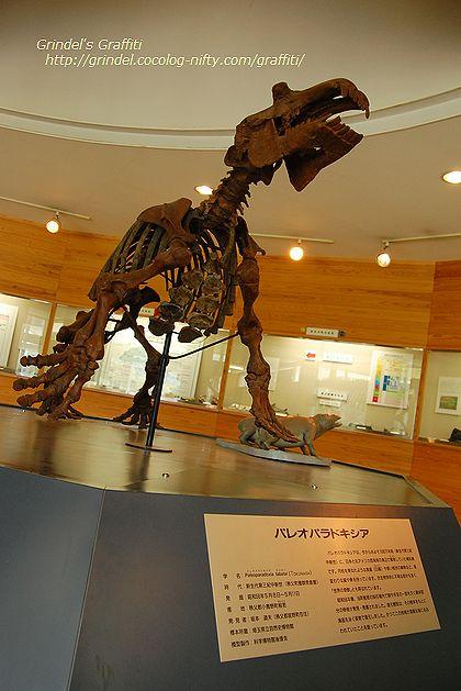 Paleoparadoxiaogano