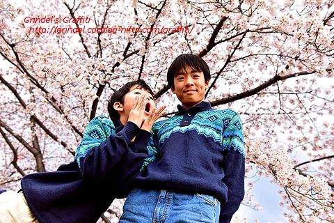 Shunharu170409akasakadai