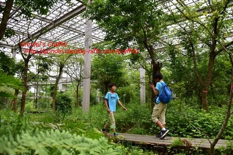 Shunharu170625oomurasakicenter2