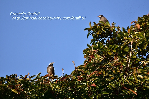 Birds180121inthepark2