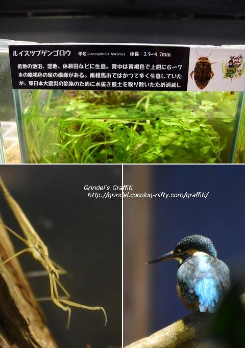 18tohoku_aquamarine3